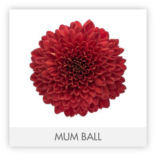 MUM BALL 10